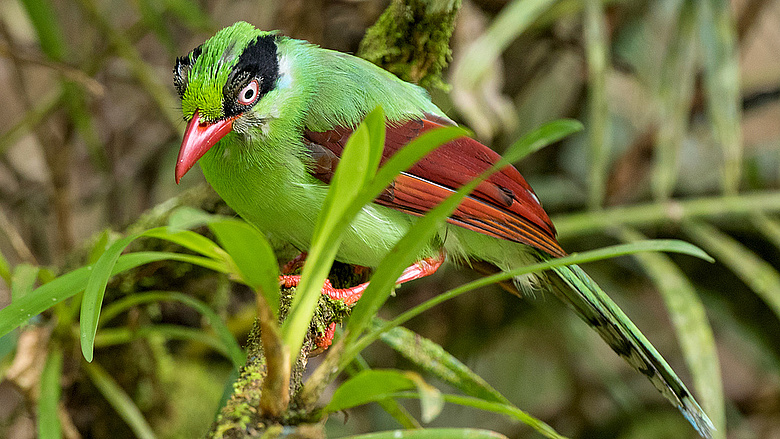 a madarak internetes bevétele)