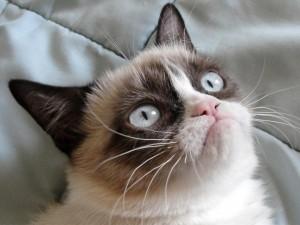 hogyan lehet leggyorsabban pénzt keresni macskában