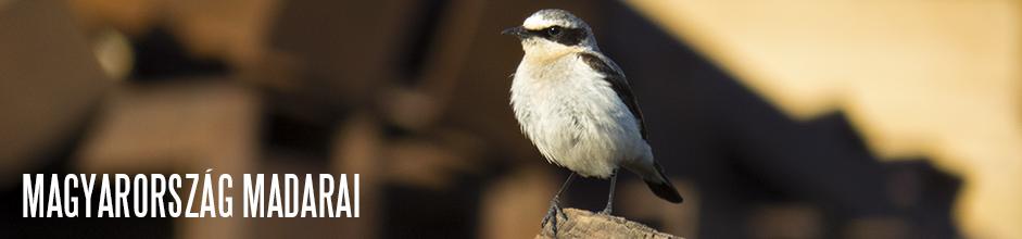 online kereső madarak